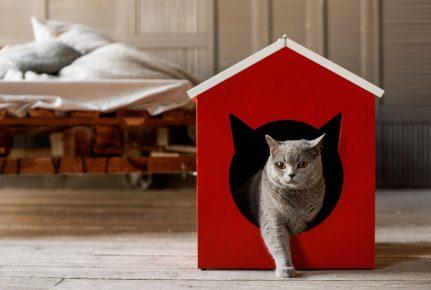 Кошка выходит из домика