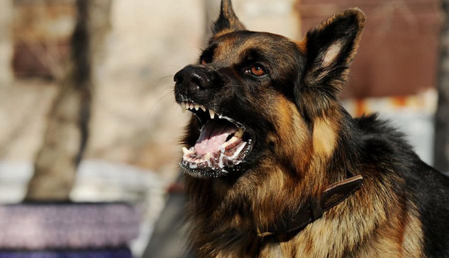 топ злых собак