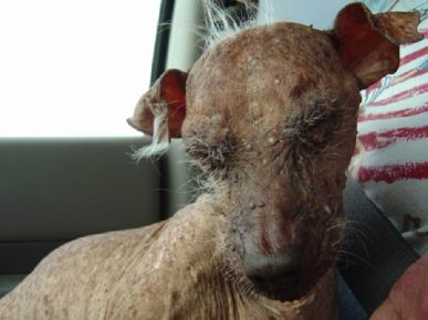 Бородавки у самой страшной собаки в мире