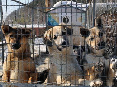 Брошенные собаки Иркутского питомника