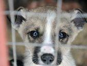 Брошенные собаки перевоспитывают