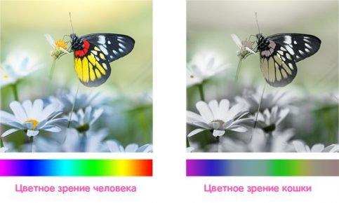 Сравнение цветого восприятия кошки и человека