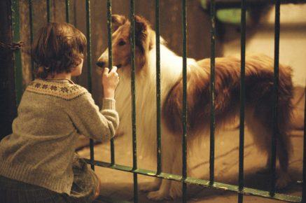 Кадр из фильма «Лесси»