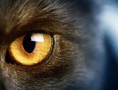 Как видит кошка