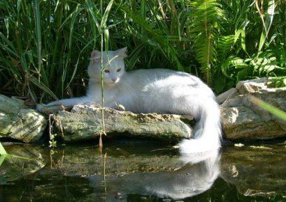 Кошка у реки