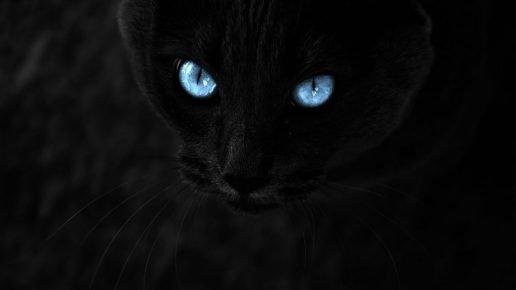 Кошка видит в темноте