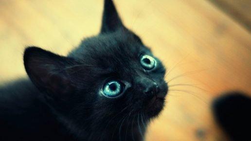 Котёнок смотрит