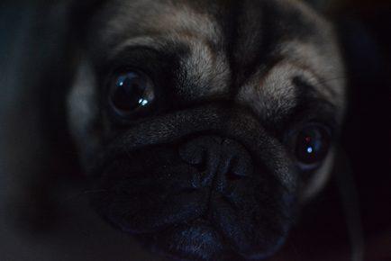 Собака в темноте
