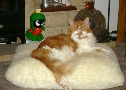 Самый старый кот в мире на лежанке