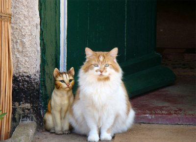 Щебень сидит рядом с фигуркой кошки