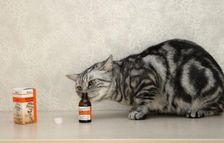Кошка нюхает валерьянку