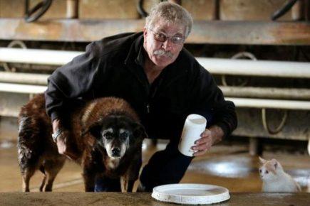 Хозяин ухаживает за своим пожилым псом