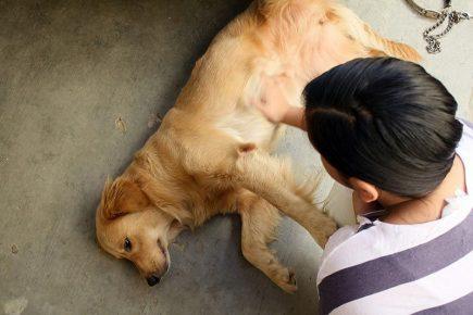 Приступ эпилепсии у собаки