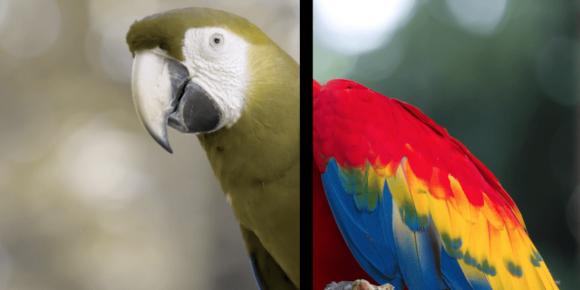 Различия в восприятии окраса попугая собакой и человеком