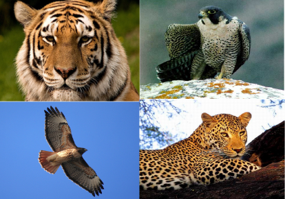 Редкие животные в «Законе»