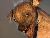 Самая страшная собака в мире