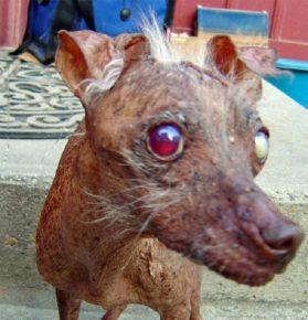 Самая страшная собака в мире с красным глазом