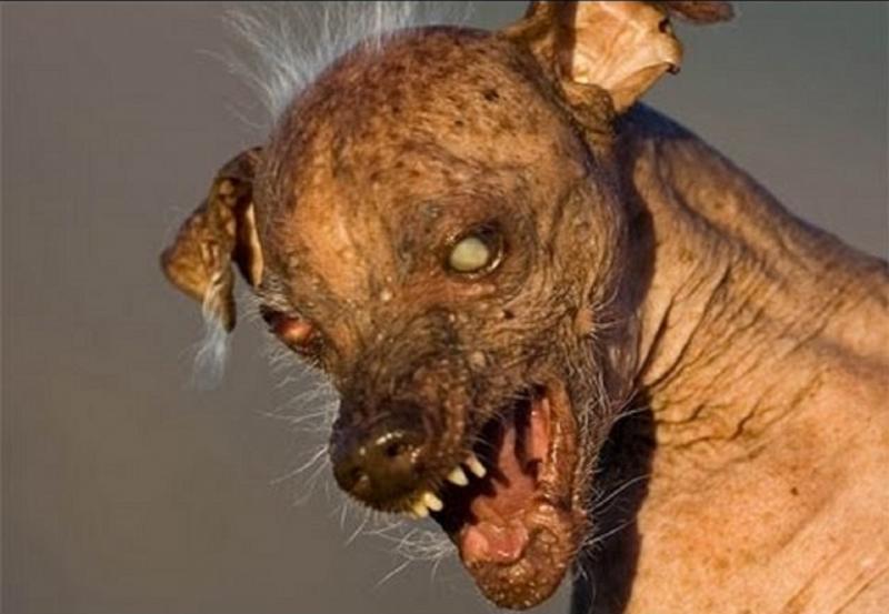 Смешные картинки и фото животных и людей мутантов