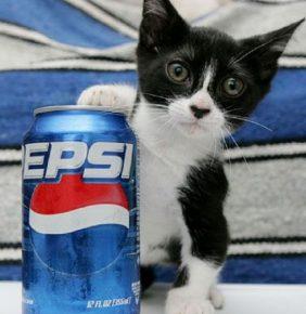 Самый лёгкий кот Пит