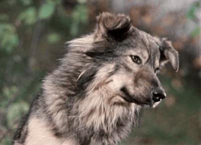 Собака из картины «Пёс Барбос и необычный кросс»