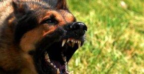 ТОП-10 пород самых злых собак
