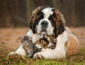 ТОП-10 самых добрых пород собак