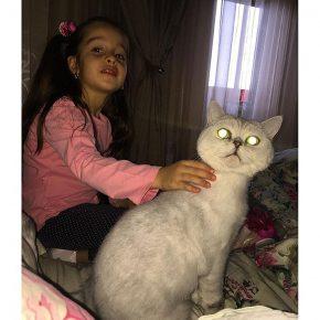 Кошка Бородиной