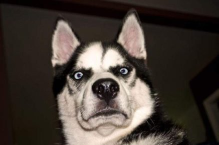 Недовольная собака