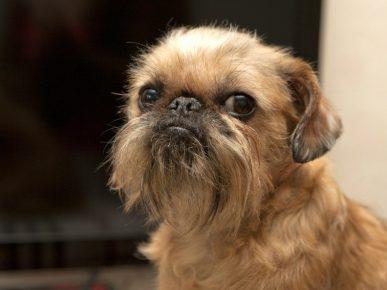 Собака из фильма «Сладкий ноябрь»