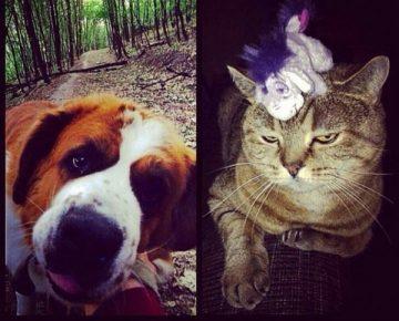 Домашние животные родителей Егора Крида