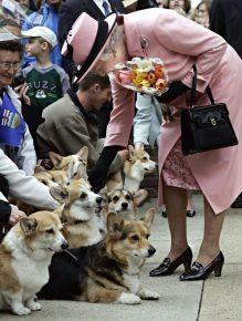 Елизавета II гладит собак