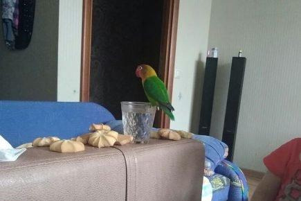 Гоша любит свободу!