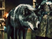 Какая порода собак снималась в «Игре престолов»