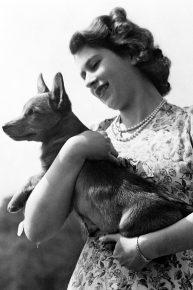 Какая порода собак у английской королевы