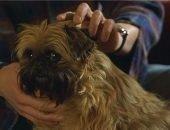 Какая порода собак в фильме «Сладкий ноябрь»