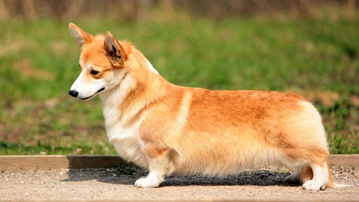 Какая порода собаки у Журова