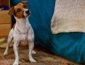Какая порода собаки в фильме «Маска»