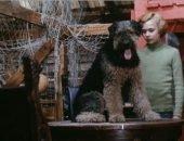 Какая порода собаки в фильме «Приключения Электроника»