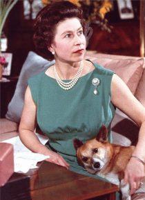 Королева с собакой