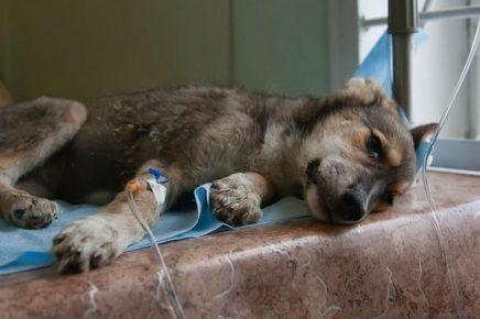 Лечение собаки