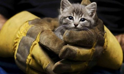 Малыша спасли пожарные