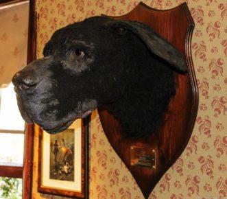 Собака Баскервилей в Лондонском музее Шерлока Холмса
