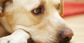 Не расстраивайте собак