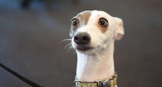 Смешное фото собак