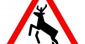 Осторожно, дикие животные!