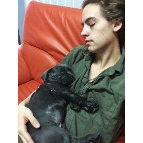 Коул со спящим щенком на руках