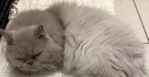 Персидского кота выбросили на помойку