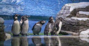 Пингвины Приморска