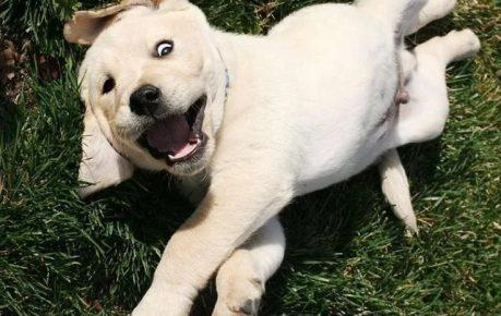 Забавная собачка