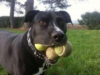 Собака с мячиками